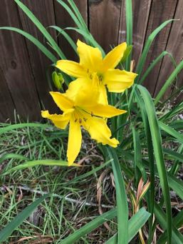 yellow lil