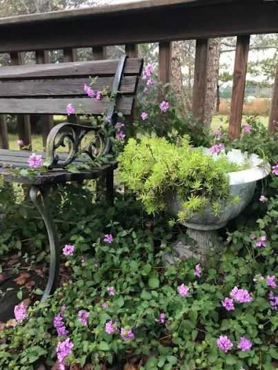 bench, pot and flowers